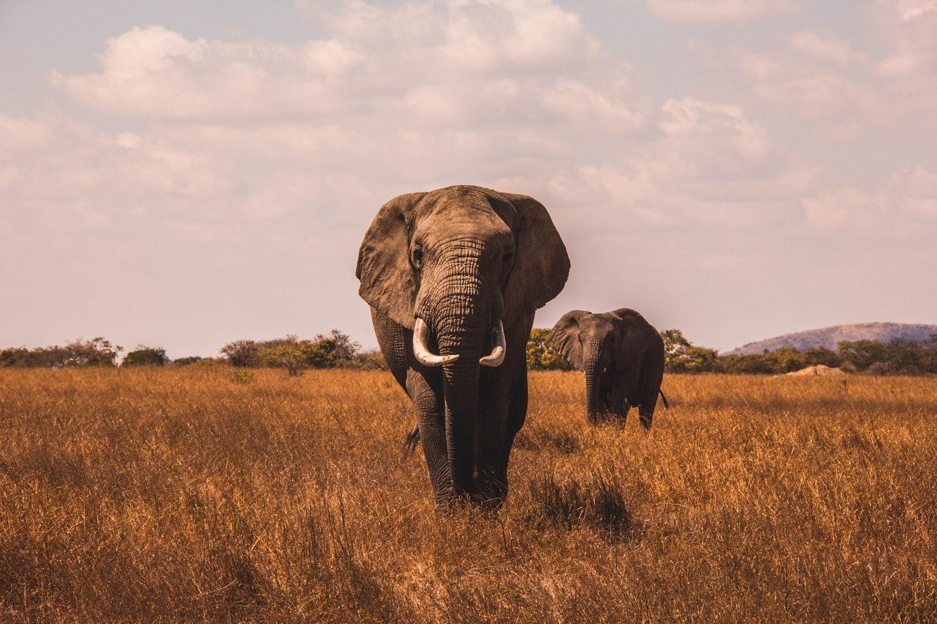 Elefanten im Okavango Delta. Brodos Adventure Club.